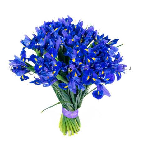 Ирисы, купить цветы Тольятти, доставка цветов Тольятти, Cvet-pro