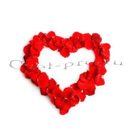 Лепестки роз, купить цветы Тольятти, доставка цветов в Тольятти, Cvet-pro