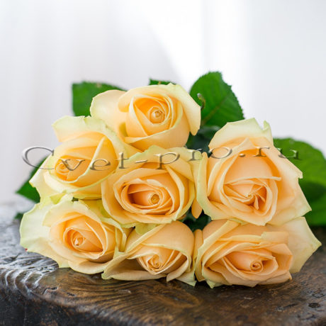 Букет кремовых роз, купить цветы в Тольятти, доставка цветов в Тольятти, букет кремовых роз, Cvet-pro