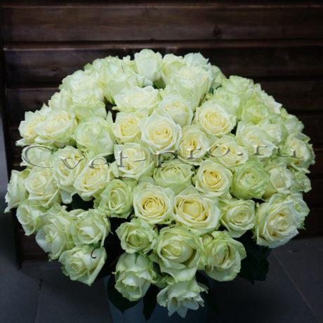51 белая роза, купить цветы Тольятти, доставка цветов в Тольятти, 51 белая роза, Cvet-pro