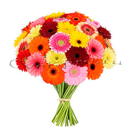 Герберы, купить цветы Тольятти, доставка цветов в Тольятти, Cvet-pro