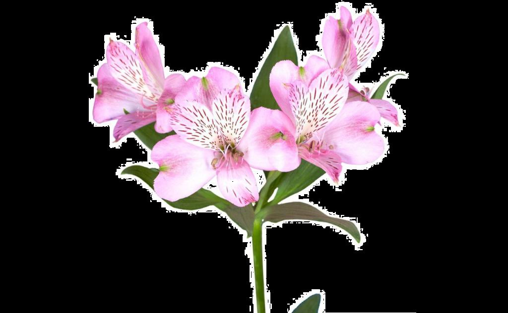 букет цветов, букет цветов Тольятти, альстромерия