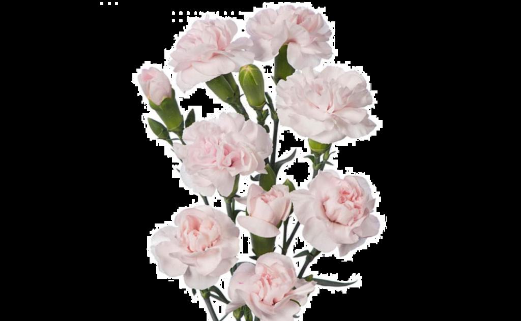 букет цветов, букет цветов Тольятти, гвоздика