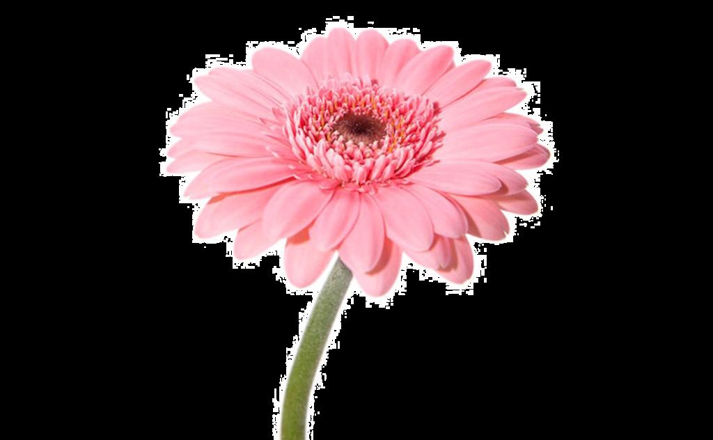 букет цветов, букет цветов Тольятти, гербера