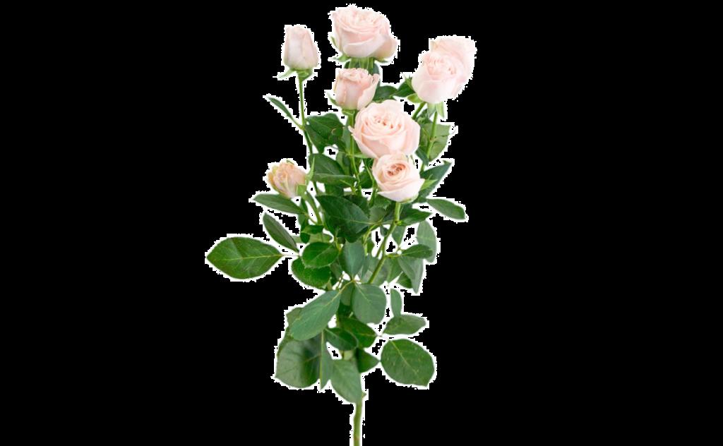 букет цветов, букет цветов Тольятти, кустовые розы