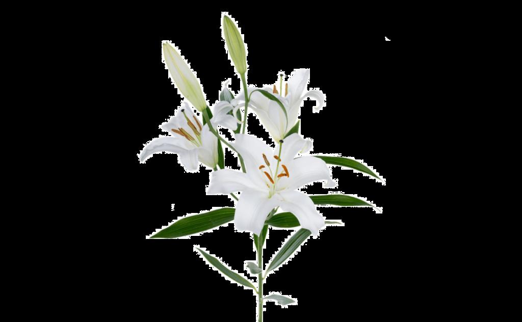 букет цветов, букет цветов Тольятти, лилия