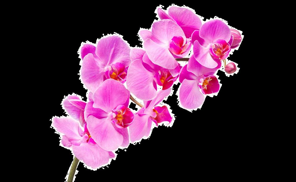 букет цветов, букет цветов Тольятти, орхидея