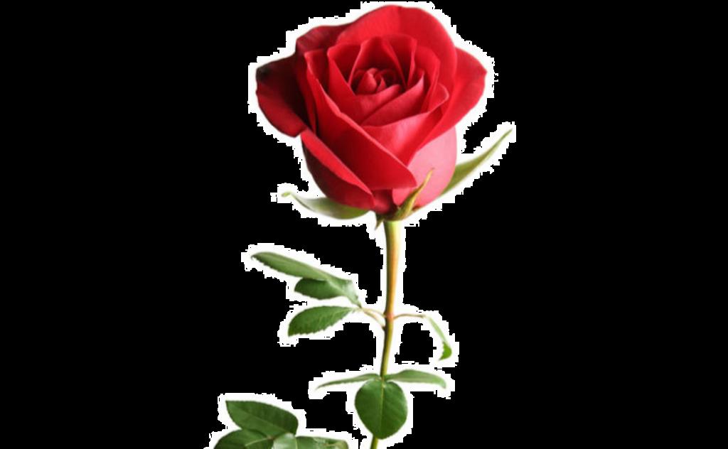 букет цветов, букет цветов Тольятти, роза