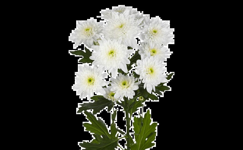 букет цветов, букет цветов Тольятти, хризантемы